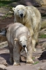 11.04.2019 - Tiergarten Nürnberg: Neuer Eisbär ist da